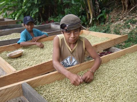 不良豆を取り除く少年達