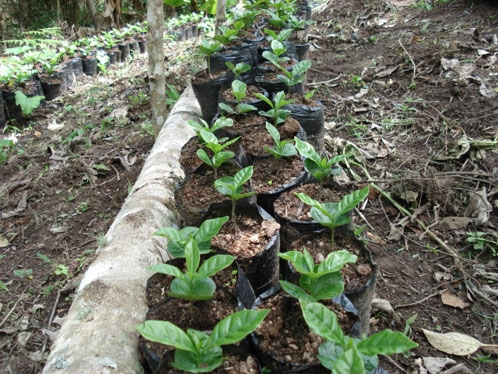 苗の植え替え3
