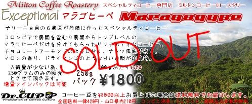 Maragogype2008-kakaku-s