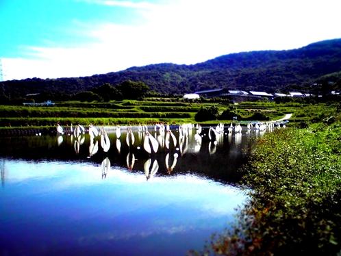 IMG_0909_R.JPG