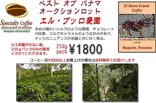 bestofpanama2010-kakaku_R.jpg