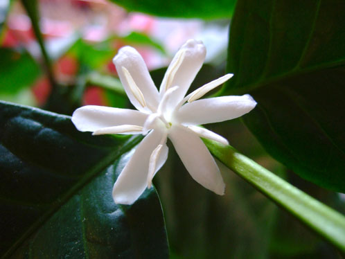 flower@milton.jpg